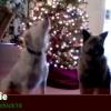 動物たちのジングルベル♪動物動画を組み合わせて歌をアテレコした素敵な作品!