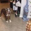 なにそれこわい!パイナップルを怖がる犬!