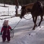 馬を散歩させる小さな女の子