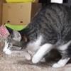 踊っているのを犬に見られて焦る猫!