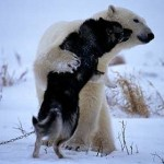 【画像】犬と熊、猿と猫、姿は違っても仲の良い動物たち
