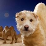 【画像】変身する犬!毎年クリスマスにドレスアップして別の動物になっちゃう犬!