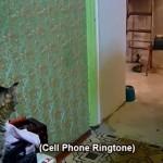 携帯電話が鳴ると持ってきてくれる猫!着信音を頼りに探してきてくれる!