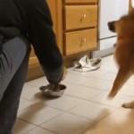 ボウルにドッグフードを投入するたびに大興奮する犬!実はこのワンコかなりの芸達者!