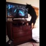 テレビを観て大興奮で連続ジャンプする犬!