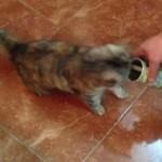 猫にマタタビ、いや、猫にオリーブ!オリーブ缶の匂いを嗅いで転げまわる猫!