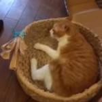 出るもんか!製作中の猫ちぐらに猫が入ってきて作業が進まない!