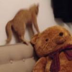 テディベアvs猫!熊のヌイグルミに怯えるネコ!