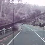 高速道路で危機一髪!暴風で倒れる木の直前で停止したら・・・?