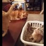 親猫のしっぽを見ていた子猫が催眠術にかかっちゃう!