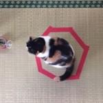 日本発の猫ホイホイ!またもや猫転送装置が流行りだしているらしい!