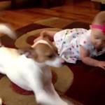 赤ちゃんにハイハイを教えてもらう犬