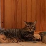 怠惰で横着で怠慢な猫