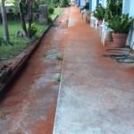 道路が赤いカニでびっしり!クリスマス島で毎年発生するカニさん大移動!