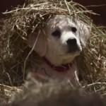 バドワイザーが贈る感動スーパーボウルCM!子犬と馬の友情物語!