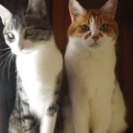 反応する猫しない猫!対照的な二匹の猫が面白すぎる!