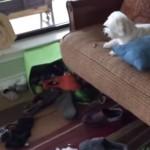 誰が部屋をめちゃめちゃにしたのですか!!ちょっと困っている犬が超面白い!