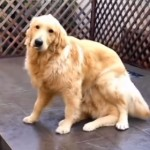 8秒動画!手品をする犬!