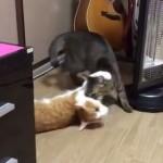 見たことの無い回転をする猫と、回転をさせるネコと、暖をとるネコ!