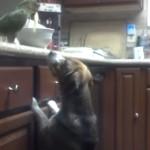 犬にスパゲッティを食べさせてあげる鳥!