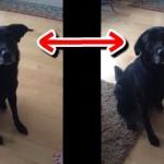 からかわれる犬。飼い主の言葉に愛らしく反応するワンコが可愛い!