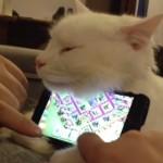 世界一可愛い猫のスマホスタンド