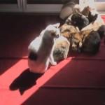 猫密集!日差しに集まる猫たちの1日を1分で観られるタイムラプス!