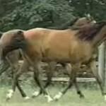 シンクロしちゃう2匹の馬