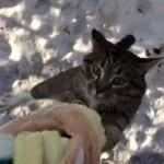 ラプンツェルごっこする猫