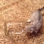 ビンに入って転がる子猫