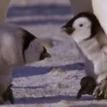 過酷な子育て!皇帝ペンギンのオスは2ヶ月間も足の上で卵を抱いて温め続ける!