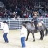 ちゃんと踊ってるー!ラインダンスする馬!