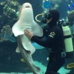 お腹を撫でられて気持ちよい表情のサメ