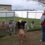名前を呼ばれるまで待つ16匹の犬!でも最後の1匹は?
