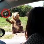 片手で食パンをキャッチする熊さん!