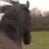 再会する3頭の馬。感動の優しい時間!