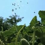 爆発植物が美しい!種子を飛ばすためにハジける瞬間の映像!