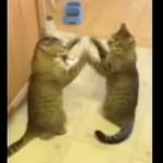 まるで鏡と戦っているような2匹の猫