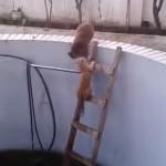 ハシゴを登るネコを突き落とす猫!勝負の行方は!?