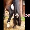 これは可愛い!馬の尻尾で遊ぶ子猫!