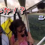 離陸後に仰天!猫が飛行機の翼に!羽根に!