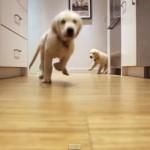 ゴハンに向かって全力疾走する二匹の子犬!この毎日の様子を9ヶ月間撮影!