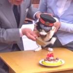 たま駅長、安らかに!和歌山電鉄のネコ駅長「たま」永眠。