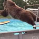プールで遊ぶ熊さん