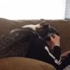 めっちゃスリスリと擦り寄る猫