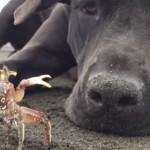 海でカニさんを見つけた犬