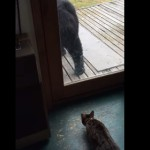 ネコ大活躍!猫に驚く熊と、熊を撃退する猫!