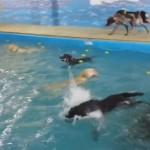 プールが大好きな犬たち