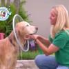 犬を洗う用のホースノズル!リング型で360度に水を噴出!
