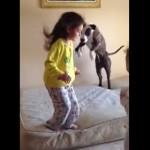 女の子が犬に教える!ベッドの上でジャンプする方法!